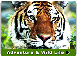 Adventure Wildlife of India, famous Adventure Wildlife tour of India, popular India wildlife Sanctuaries info, about famous national parks in India, wildlife info of all states in India, info on Adventure Wildlife India